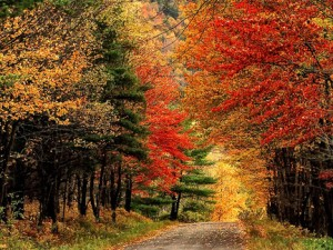 Fall colors on Doe Brook Road, Delaware County in the Catskill Mountains. Mike Greenlar / The Post Standard.