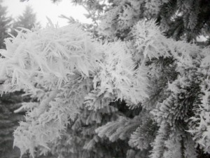 snow-bloggg