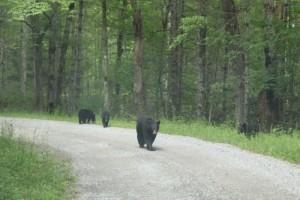 bear-encounter-on-rich
