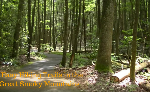 4 Easy Hiking Trails in the Great Smoky Mountains