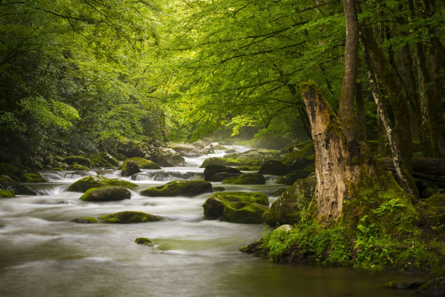 Peaceful Great Smoky Mountains National Park Foggy Tremont River Relaxing Nature Landscape Scenics Near Gatlinburg Tn