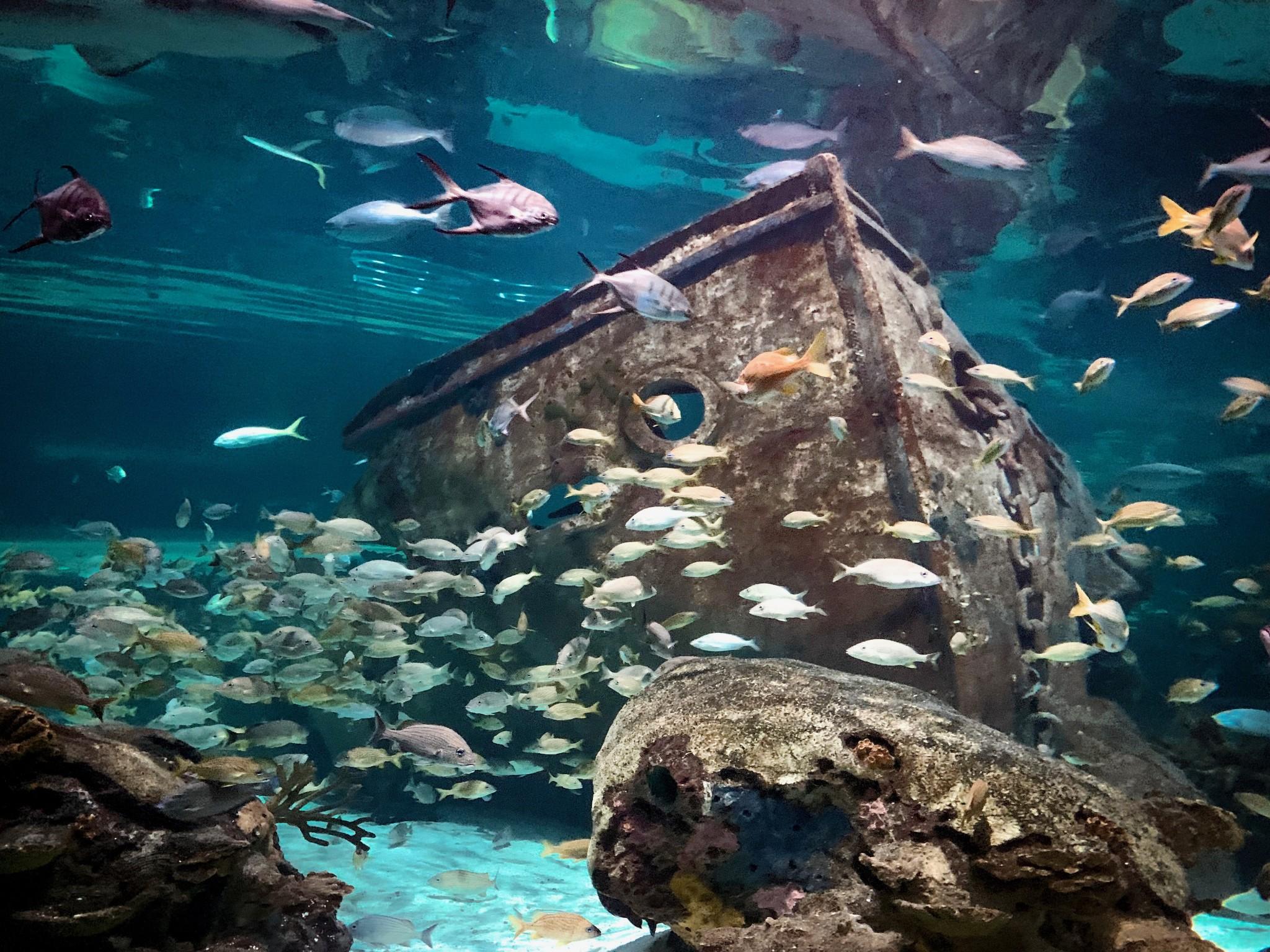 Gatlinburg Tn Hotels Near Ripley Aquarium - Aquarium Views