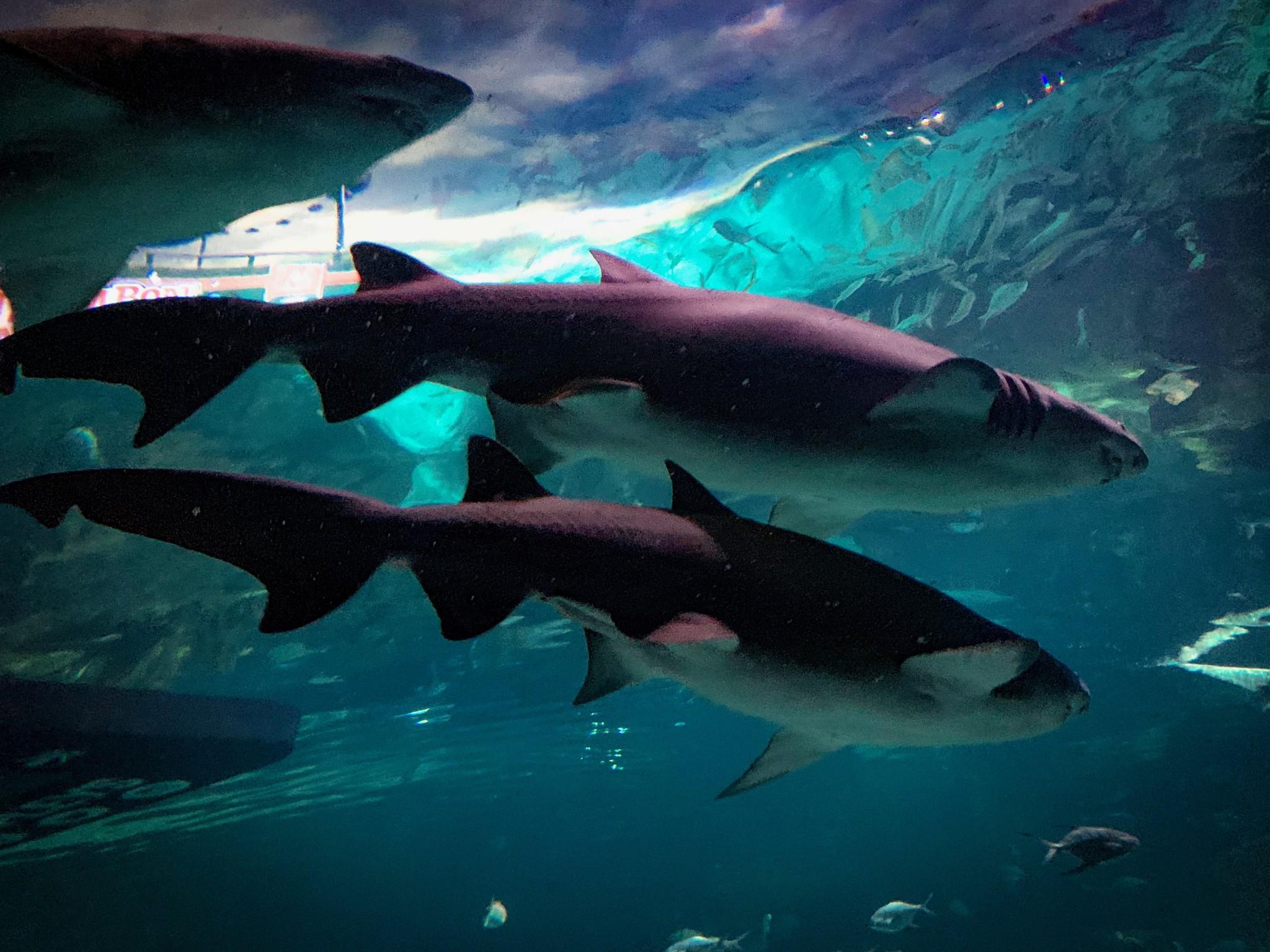 Ripley's Aquarium 8